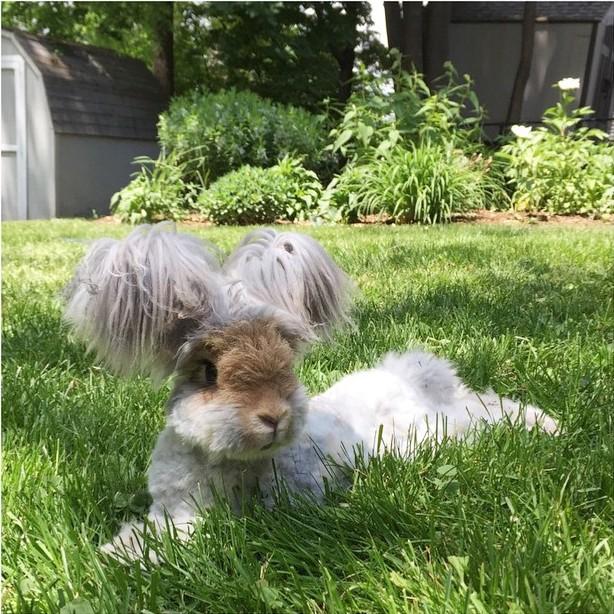 El conejo de grandes orejas recostado en el jardín