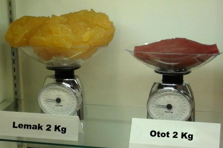 comparación del peso de la grasa con la del músculo