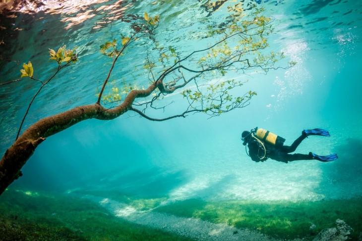 Lago en Austria donde un buzo esta a punto de pasar debajo de un árbol