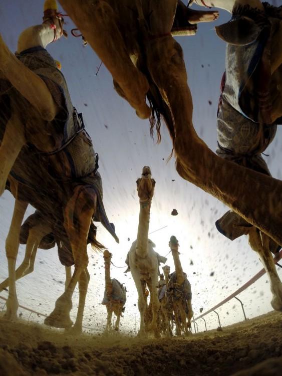 Carreras de camellos en Dubai visto desde el suelo