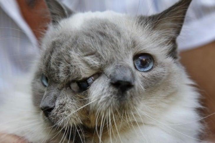 Imagen de un gato que parece que tiene dos caras (no creerás que no tiene photoshop)