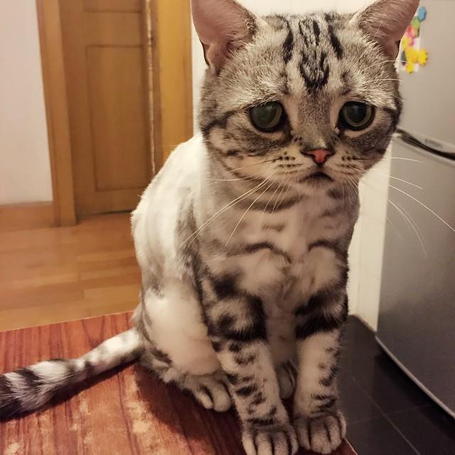 gato sobre una mesa en la cocina a un costado de un refrigerador