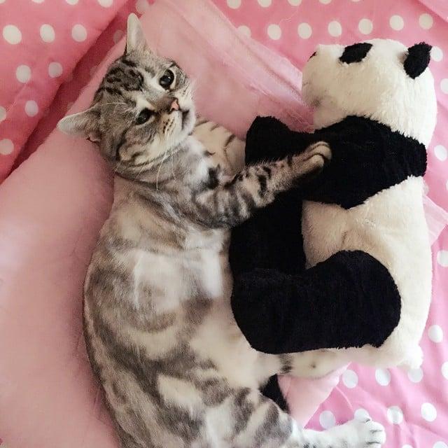 un gato acostado con un oso de peluche en forma de panda