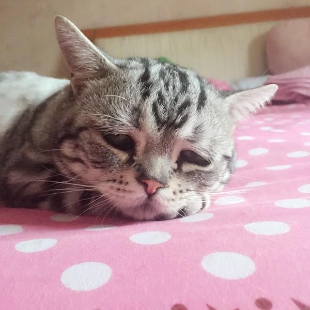 cara de un pequeño gatito sobre una cama