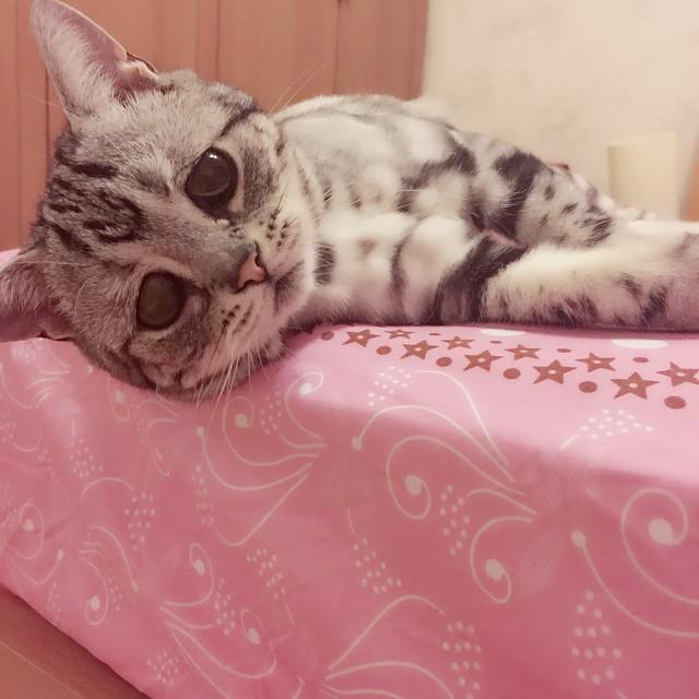 Luhu la gatita con la cara de expresión triste acostada en una cama