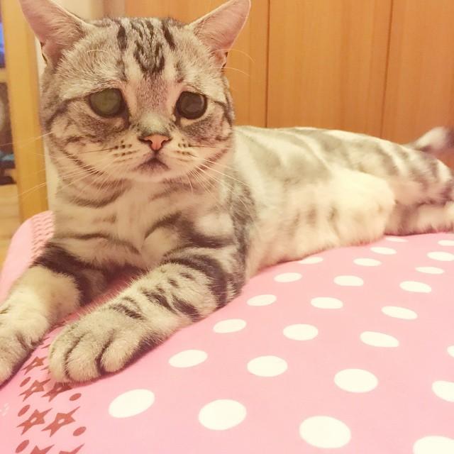 Gato con cara triste acostado en una cama