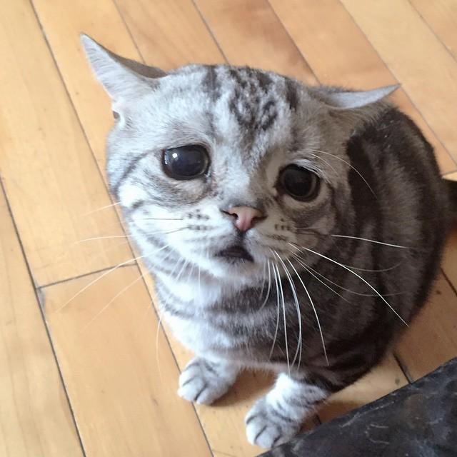gatita en el piso con cara triste