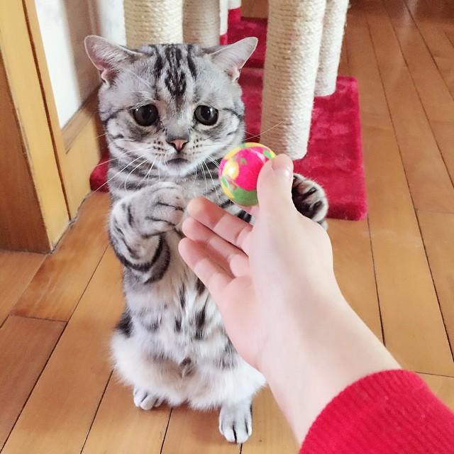 persona dando una pelota a un gato con cara triste