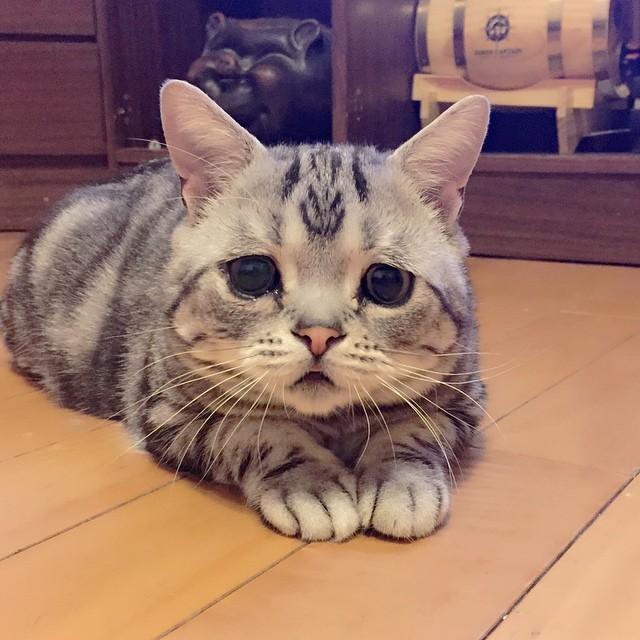 una pequeña gatita acostada en el suelo
