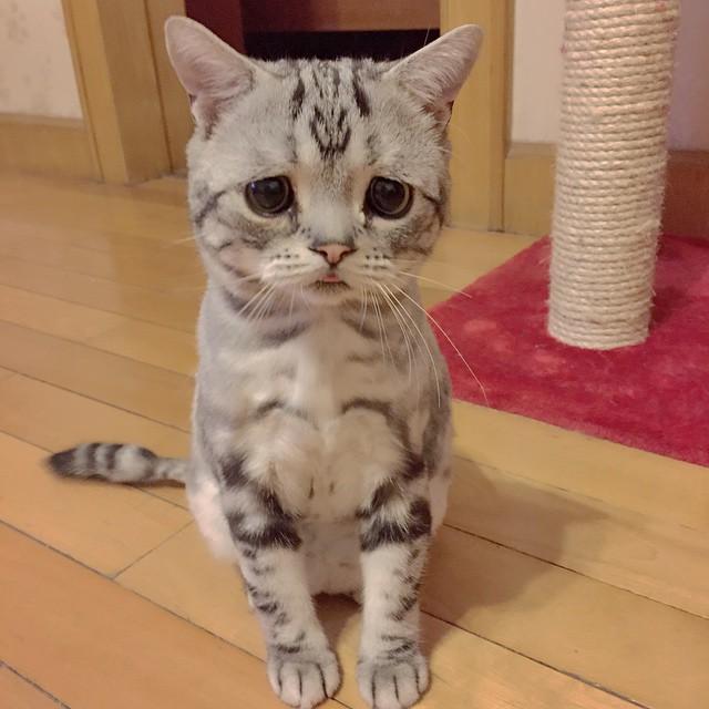 gato sentado en el suelo viendo hacia el piso