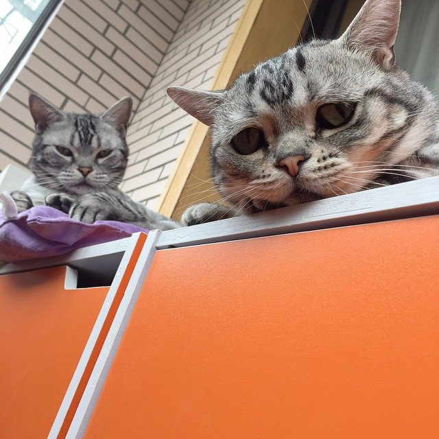 dos gatos sobre un mueble