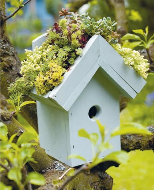 Mini jardín hecho dentro de la casa de un pájaro