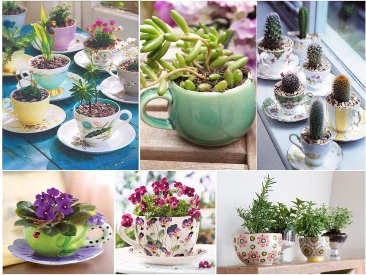 Mini jardín dentro de tazas de té