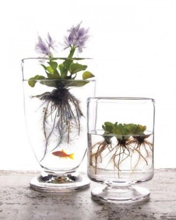 Mini jardín de plantas acuáticas en un vaso