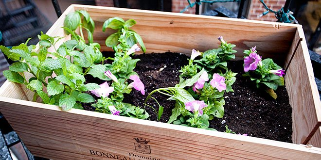 Mini jardín dentro de una caja de madera