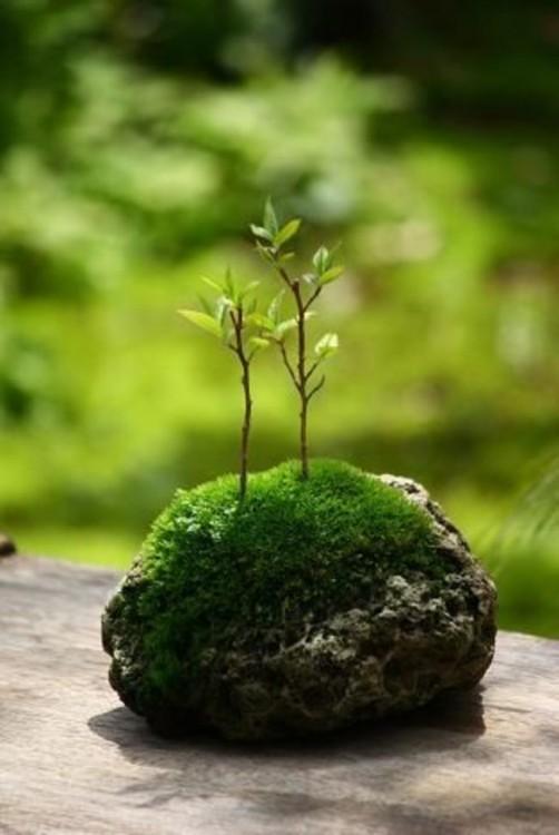 Mini jardín sobre una piedra