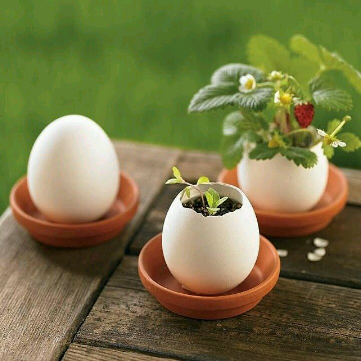 Mini jardín dentro de las cascaras de huevo