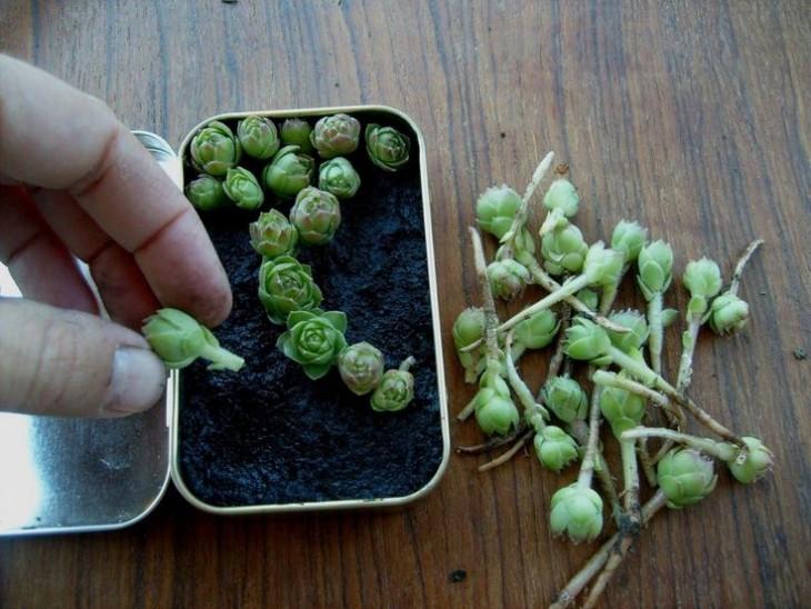 Mini jardín dentro de una caja de Altoids