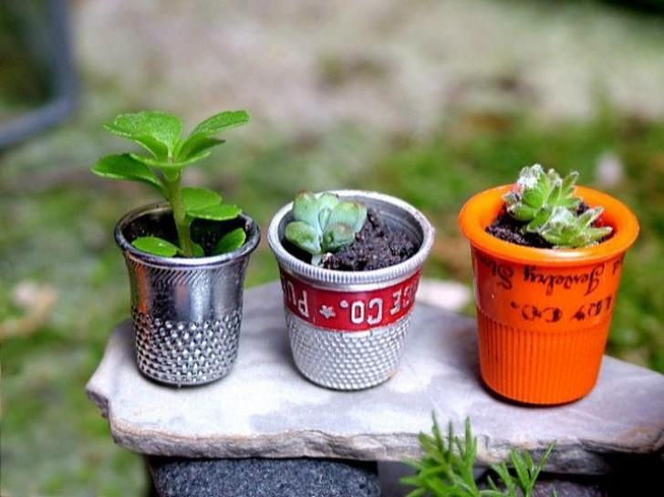 Mini jardín dentro de un dedal