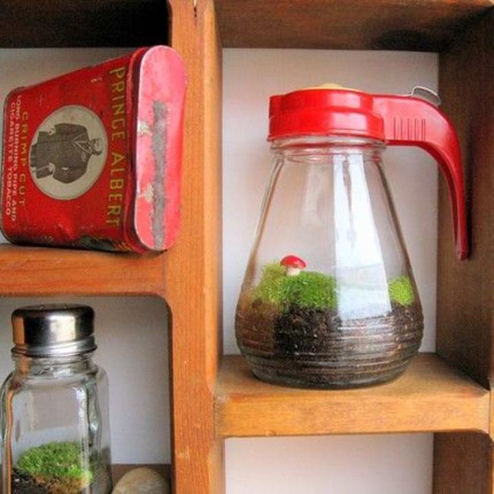 Mini jardín dentro de una jarra y un salero