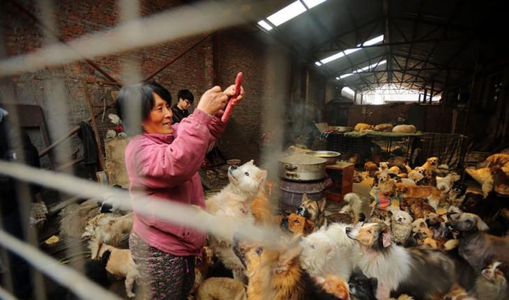 Una mujer repartiendo carnes frías desde arriba a un gran número de perros dentro de un cuarto
