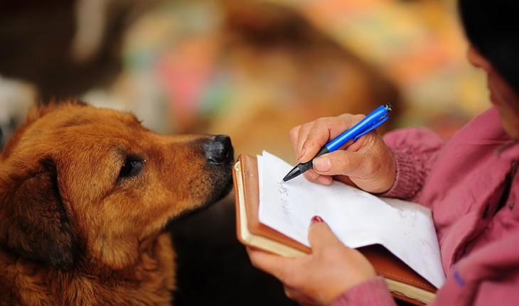 Manos de una mujer escribiendo en una libreta con un perro frente a ella mirándola