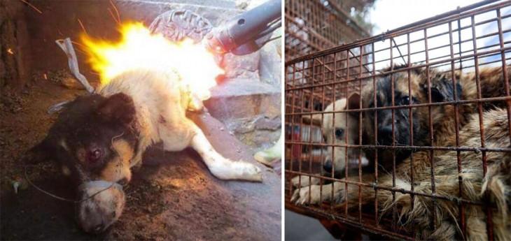 Fotografía divida en dos partes en una un perro siendo quemado y en otra unos perros dentro de una jaula