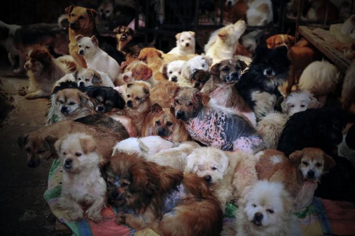 Muchos perros de diferentes razas dentro de una habitación en China