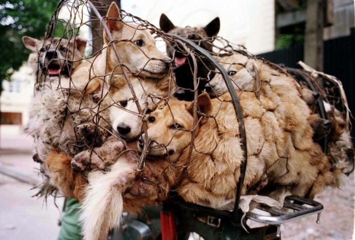 Un grupo de perros enrededados en una red de alambre