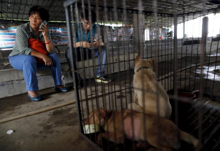Mujer junto a un chico sentados en unos bloques de cemento frente a las jaulas con dos perros