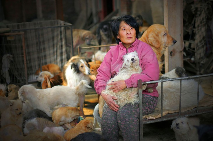 Mujer sentada dentro de una habitación rodeada de perros