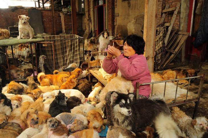 Una anciana preparando una inyección sentada en una cama rodeada de muchos perros
