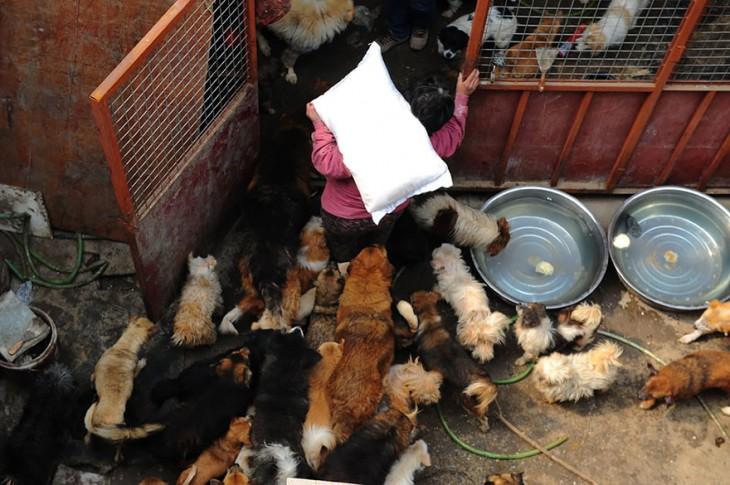 Persona cargando un costal lleno de pan para alimentar a unos perros que están dentro de una habitación