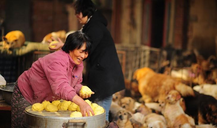 Una mujer sonriendo en China acomodando el pan para alimentar a los perros de un albergue