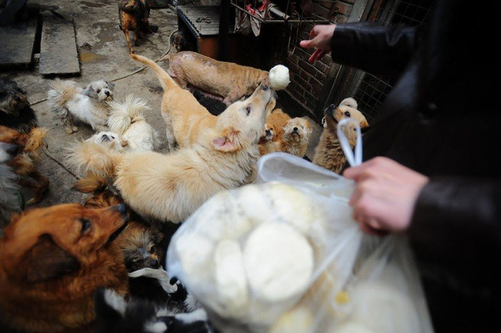 Manos de una persona aventando pan hacia unos perros que están alrededor