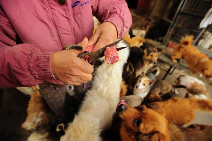 Manos de una persona cortando carnes frías con unas tijeras para dar de comer a unos perros
