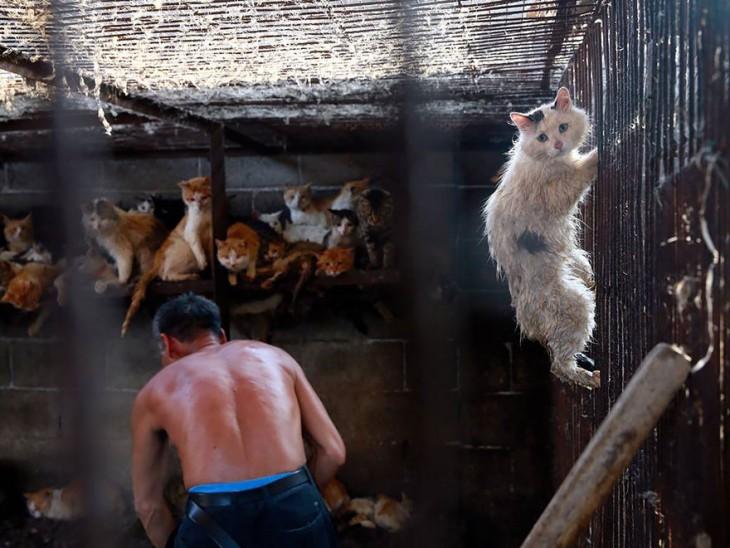 Parte trasera de un hombre en una habitación llena de gatos