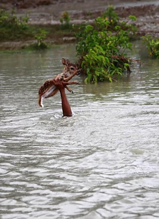 Brazo sosteniendo a un ciervo fuera de un río