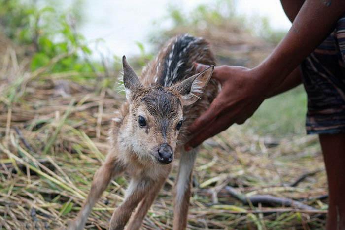 Mano de una persona sosteniendo a un ciervo en el césped