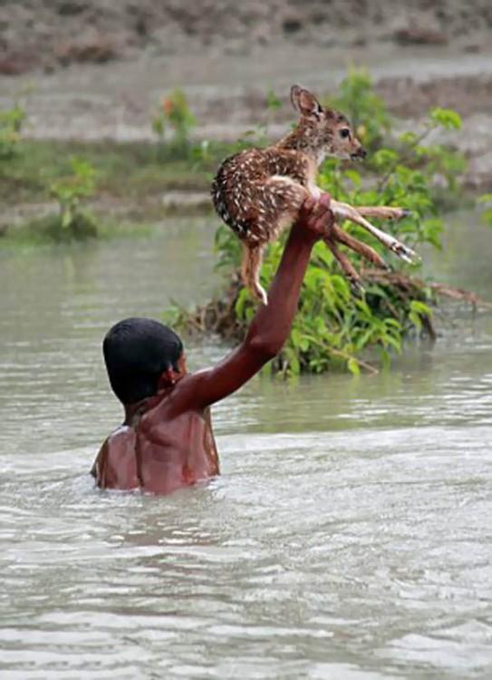 Un  niño dentro de un río agarrando un ciervo con una mano
