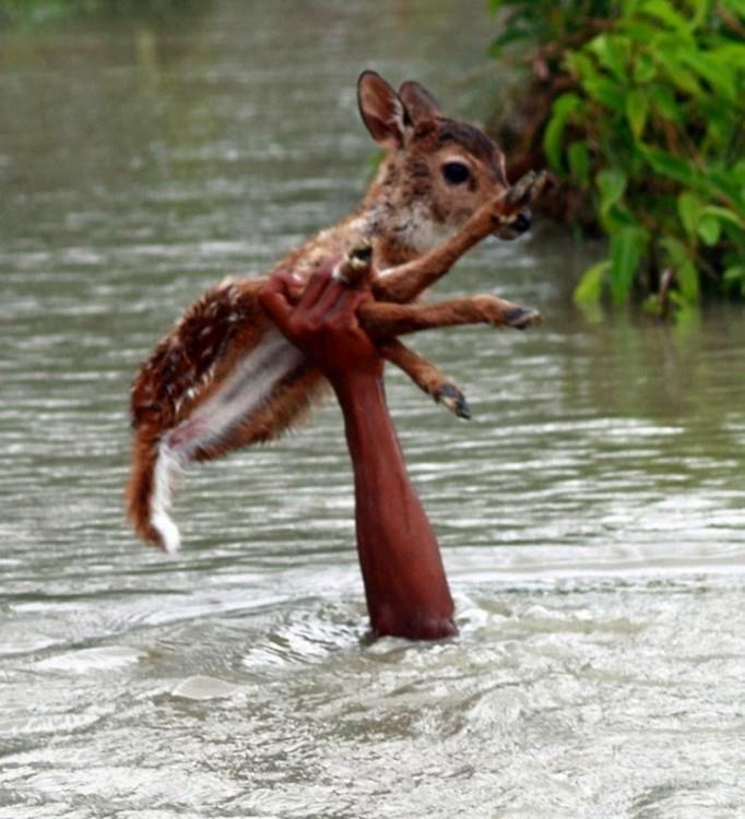 Mano de un niño dentro de un río salvando a un ciervo