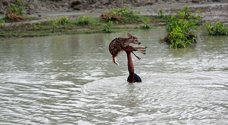 Niño nadando en un río salvando a un ciervo