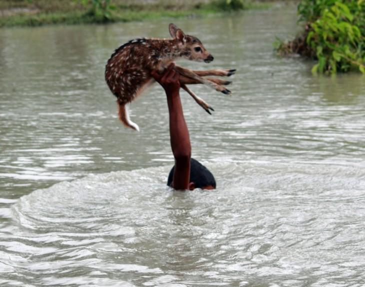 Niño dentro de un río sacando a un ciervo con un brazo