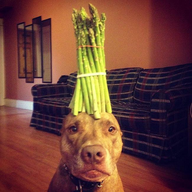 Perro sostiene cosas en la cabeza con algo encima