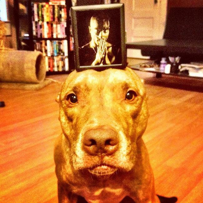 Perro sostiene cosas en la cabeza con un portaretrato encima