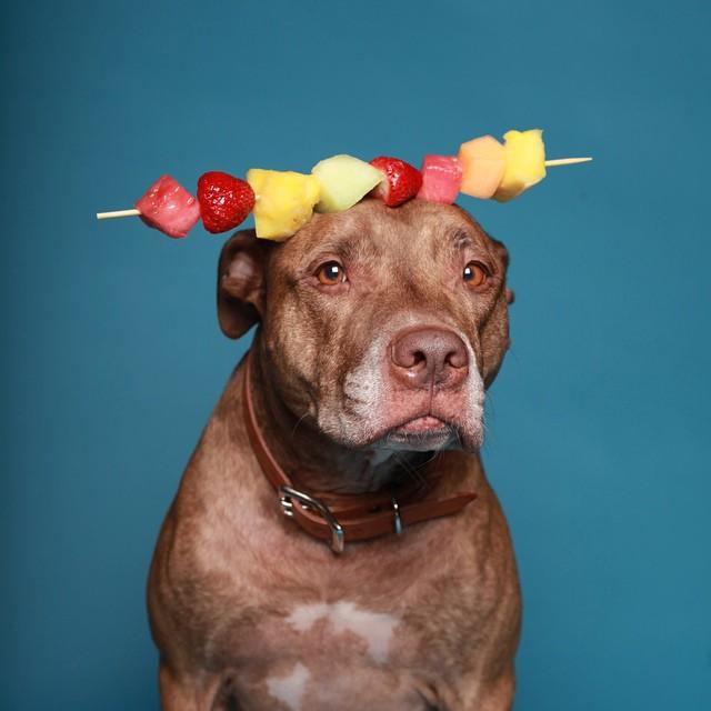 Perro que sostiene cosas en la cabeza con fruta encima