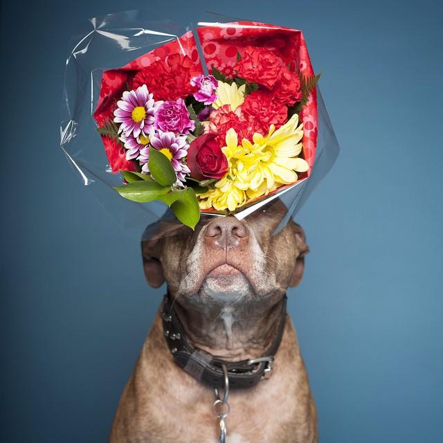 Perro que sostiene cosas en la cabeza con unas flores encima