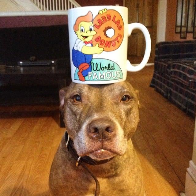 Perro sostiene cosas en la cabeza con una taza encima