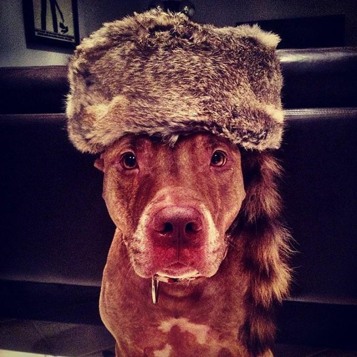 Perro sostiene cosas en la cabeza con un gorro en la cabeza