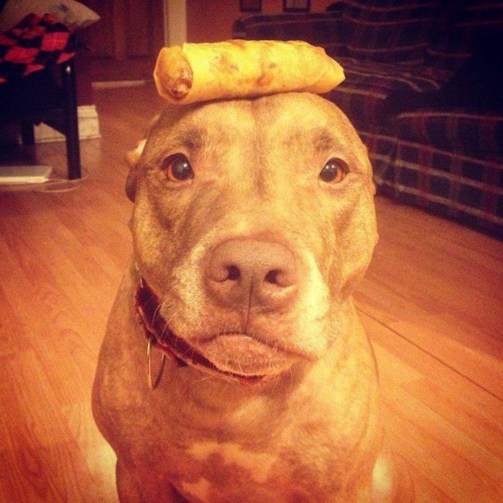 Perro sostiene cosas en la cabeza con un pequeño taco encima